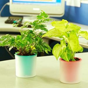 正品 活性炭有氧植栽绿色植物小盆栽 心型草