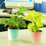 正品 活性炭有氧植栽绿色植物小盆栽 铜钱草