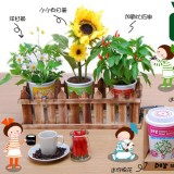 3盒装新款有机植物栽培(花卉类)