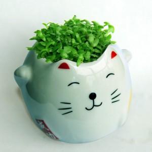 DIY有氧植栽 招财猫陶瓷植栽 工作桌面迷你青草种植  多色