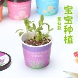 宝宝种植微景观迷你可爱盆栽桌面生态植物小盆景 薰衣草 288个/箱